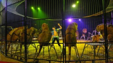 Photo of La France interdit les animaux sauvages dans les cirques !